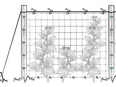 сетка для вертикальной поддержки вьющихся растений