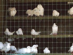 Сетка для ограждения животных, птиц и территорий Синтофлекс Д