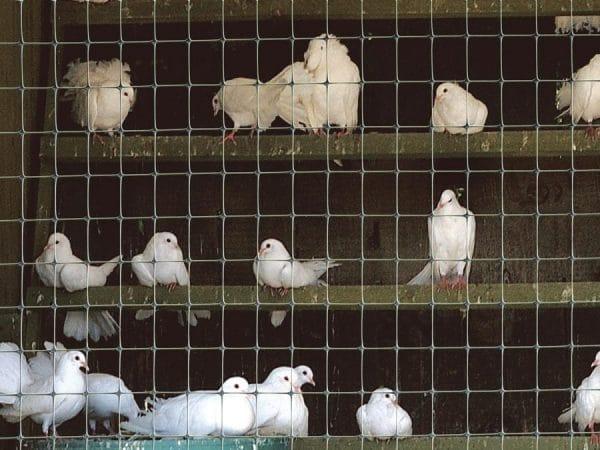 Сетка для ограждения животных, птиц и территорий СИНТОФЛЕКС Д (2Х100 мп)