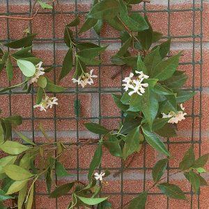 Сетка для вьющихся растений COROLLA зеленая (1х30 м.п.)